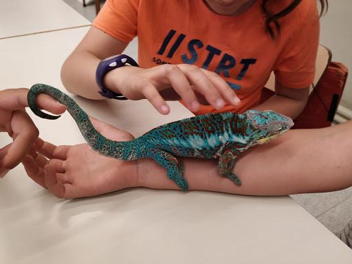 Rèptils a 4t de primària